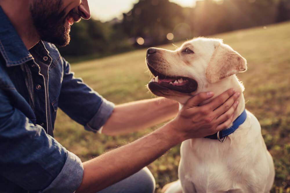 Come aiutare il tuo cane con lartrite