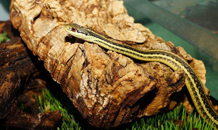 edbaeacfedbeadf garter snake