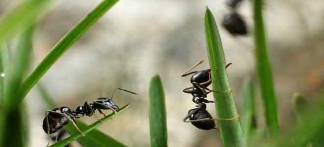 Cause di uninfestazione da formica