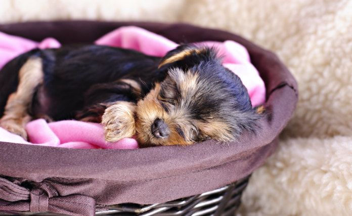 Aiuta il tuo cucciolo a dormire tutta la notte Aiuto