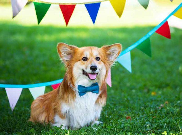 Come organizzare una festa di compleanno di animali domestici pawsitively