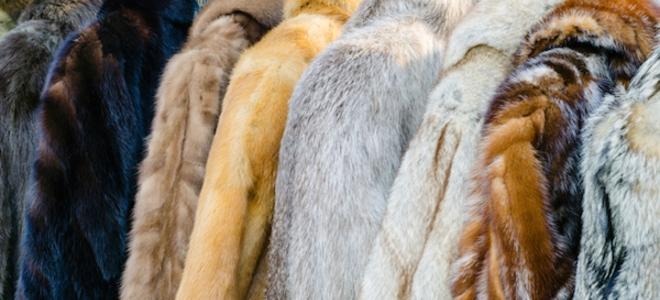 Come pulire la tua costosa pelliccia