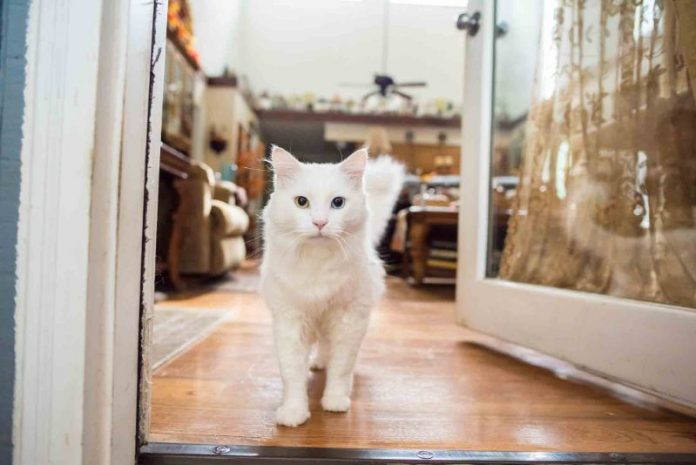Comunicazione del gattino che cosa sta cercando di dirti la