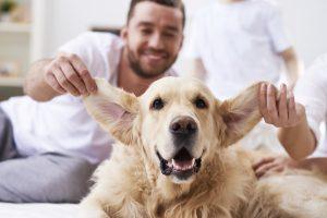 Così felici insieme vivere con un animale domestico quando si