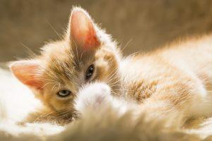 Cosa hai sempre voluto sapere sulla cura dellorecchio degli animali