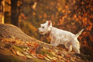 Divertenti attività autunnali per te e il tuo animale domestico
