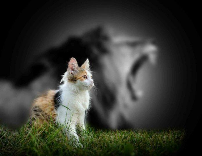 Fatto felino o finzione Cat Myths Legends and Lore for