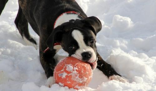 Giochi invernali allaperto con il tuo amico canino