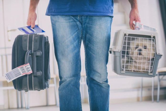I migliori consigli per viaggiare con un animale domestico con