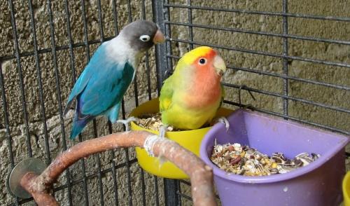 Il mio uccello in gabbia dovrebbe fare il bagno