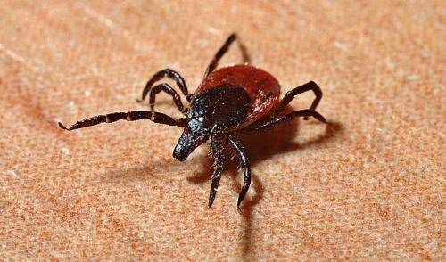 Informazioni sulla malattia di Lyme
