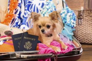 Jet Set Pet Prepararsi ai viaggi internazionali con un animale