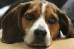 La conoscenza è potere prevenire lavvelenamento da animali domestici dentro