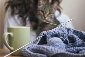 Le nostre idee regalo preferite per animali domestici fai da te