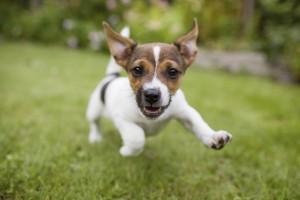 Malattia di Lyme e cani cosa devi sapere