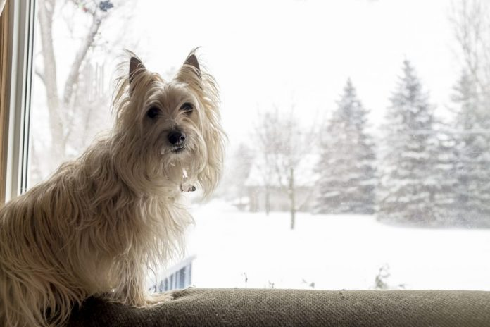 Nevicato Come mantenere attivo il tuo animale domestico durante linverno