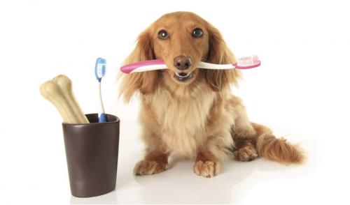 Pratiche dentistiche sane per animali domestici Wiscoy Pet Food Co