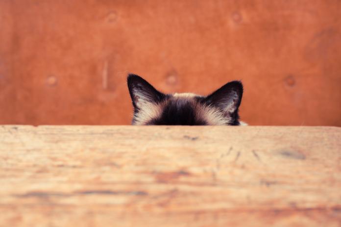 Presentazione di New Cat To Your Home Regola il