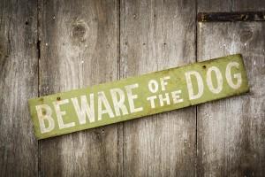 Prevenzione del morso di cane per i proprietari di cani