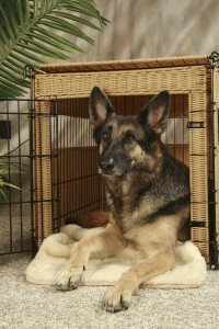 Pro Tips for Crate Training Your Pet Ospedale Glen