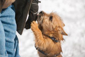 Proteggere il tuo animale domestico dalla tossicità dello scioglimento dei