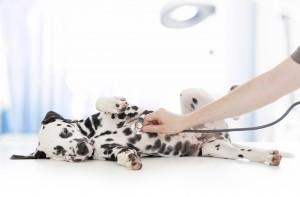 Proteggi il tuo cane dallinfluenza canina