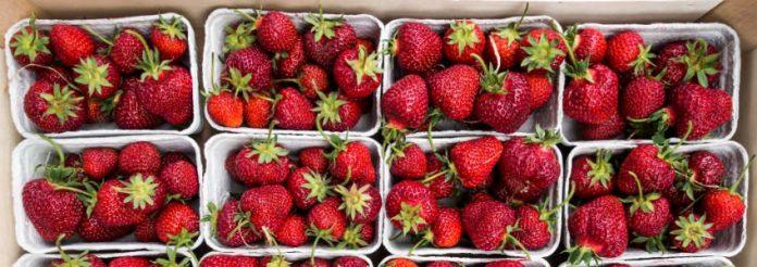 Quali frutti e verdure sono in stagione