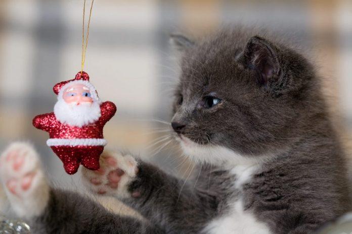 Restringi lelenco i migliori regali per i proprietari di animali