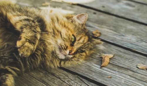 Suggerimenti per mantenere il gatto rilassato