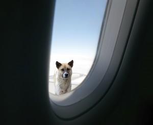 Tempo di passaporto per animali domestici come prepararsi ai viaggi