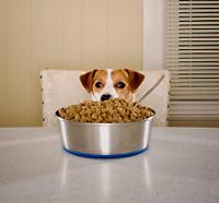 Allergie alimentari negli animali domestici cosa cercare