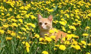 Considerazioni estive per il tuo gatto