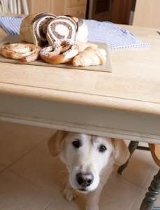 Creazione di un ringraziamento per animali domestici Consigli di