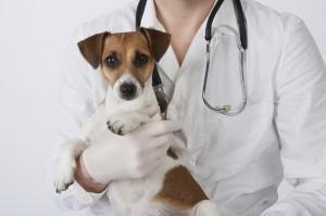 Emergenze per animali domestici come sapere e cosa fare