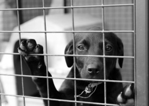 Homeless Animals Day