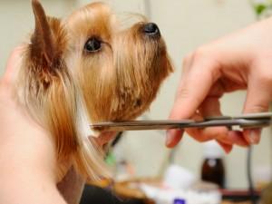 I vantaggi della toelettatura professionale degli animali domestici