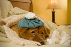 Leptospirosi e il tuo cane