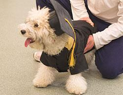 Ritorno a scuola per bambini e cani