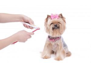 Salute dentale degli animali domestici molto più di un bel