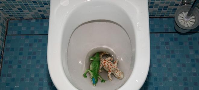 Servizi igienici intasati come rimuovere giocattoli e oggetti