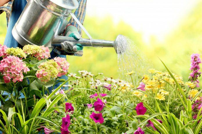 Mantenere i capelli e la pelle sani durante il giardinaggio