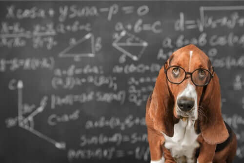 possibile stimolare lintelligenza di un cane