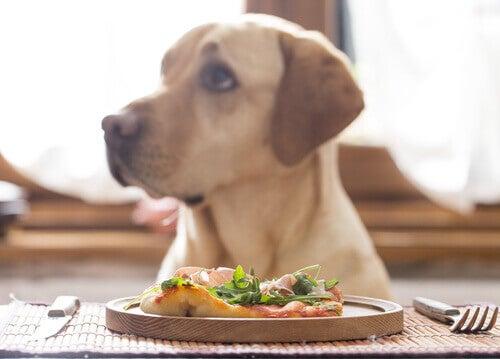 salutare per i cani seguire una dieta vegana