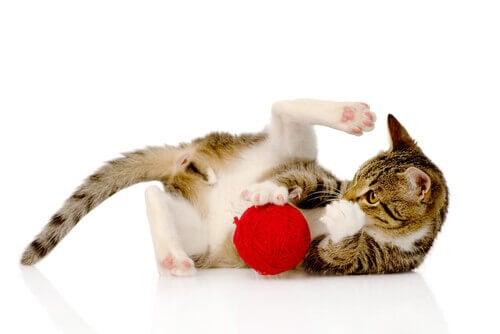 fatti curiosi sullintelligenza dei gatti