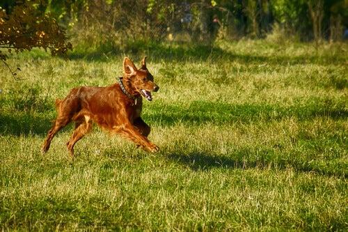 Addestramento di cani da ferma tutto ciò che devi sapere