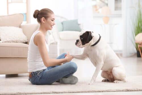 Addestrare animali domestici durante il blocco suggerimenti per i proprietari