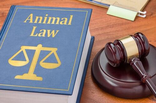 Animal Lawyer Perché un animale domestico dovrebbe averne bisogno