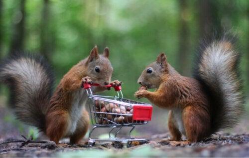 Animali che immagazzinano cibo cosa cè dietro questo comportamento
