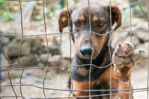 Cani da compagnia banditi da Kim Jong Un in Corea