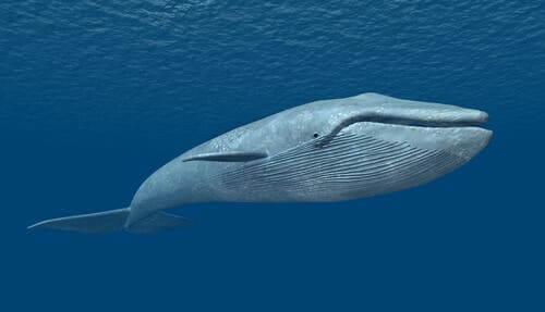 Cinque specie marine in via di estinzione I miei